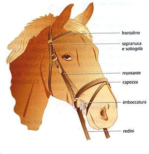 Come Costruire Un Cavallo.Piu Che Sportivo Le Basi Della Scienza Motoria